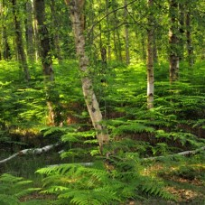 Lush green woodland - New Forest bicycle holiday