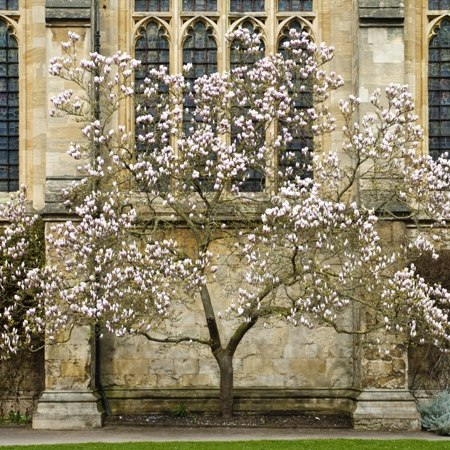 Guided cycle ride from Oxford to Blenheim - cherry tree