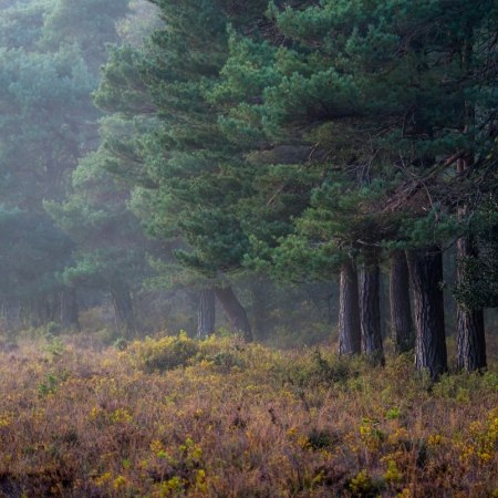 The New Forest - the best way to explore this area is by bike