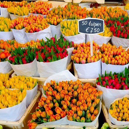 Visit Aaslsmeer flower market on our Dutch bike and barge tour, only on offer in the spring, when the tulips are in full bloom