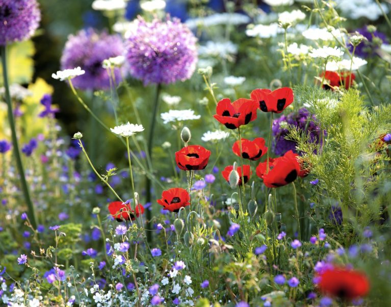 3 Fabulous Flower Shows to Plan a Cycling Holiday Around