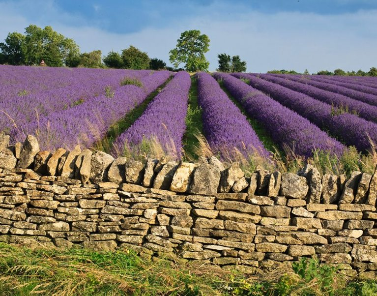 Photo credit Visit Britain - Cotswold Lavender Farm